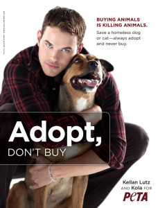 adopt-dont-buy