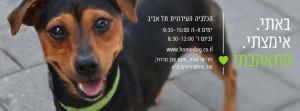 tel_aviv_adopt